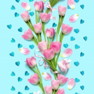 цвет Нежный тюльпан